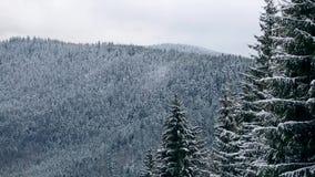 Sparren en pijnboomboomkronen en takken met sneeuw worden behandeld die De winterdag in sneeuwsparrenbos, Treetops met bergen stock video