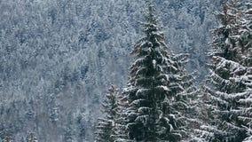 Sparren en pijnboomboomkronen en takken met sneeuw worden behandeld die De winterdag in sneeuwsparrenbos, Treetops met bergen stock videobeelden