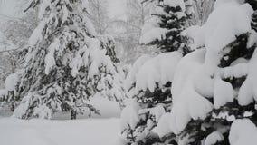 Sparren met sneeuw in bos worden behandeld dat stock footage
