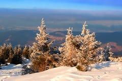 Sparren met sneeuw op achtergrondbergen en blauwe hemel worden behandeld die Stock Afbeelding