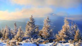 Sparren met sneeuw op achtergrondbergen en blauwe hemel worden behandeld die Royalty-vrije Stock Foto's