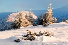 Sparren met sneeuw op achtergrondbergen en blauwe hemel worden behandeld die Stock Fotografie