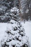 Sparren met sneeuw worden behandeld die royalty-vrije stock fotografie