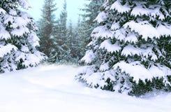 Sparren met sneeuw worden behandeld die De mooie vooravond van de winter bos Gelukkige Kerstmis royalty-vrije stock afbeeldingen