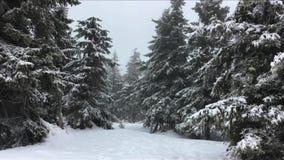 Sparren met sneeuw worden behandeld die in de wind in bewolkte de winterdag die slingeren Sneeuwval in Bergen stock videobeelden