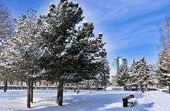Sparren met verse sneeuw op de achtergrond van stedelijk landschap en blauwe de winterhemel worden behandeld op een Zonnige ochte Stock Afbeelding