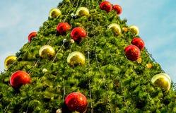 Sparren nieuw jaar Stock Foto