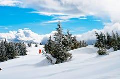Sparren in sneeuw op de bovenkant Stock Foto's