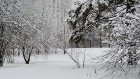 Sparren in sneeuw tegen huis in Moskou, Rusland stock footage