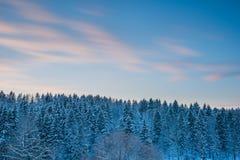Sparrenbos en zonsonderganghemel bij sneeuwwintertijd royalty-vrije stock afbeeldingen
