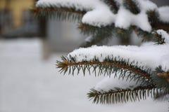 Sparrentak in de sneeuw Royalty-vrije Stock Fotografie