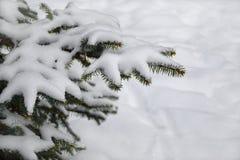 Sparrentakken in de sneeuw Royalty-vrije Stock Afbeeldingen