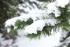 Sparrentakken met sneeuw worden behandeld die De winter boskerstmis en nieuwe jaarachtergrond stock afbeeldingen