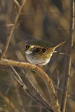 Sparrow 1 Stock Image