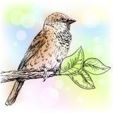 Sparrow. Hand drawn sparrow bird sitting on a branch Stock Photo