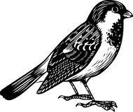 Sparrow. This image is a black and white vector illustration of a sparrow and can be scaled to any size without loss of resolution, can be variated and used for Stock Photos
