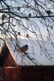 Sparrow. Stock Photo