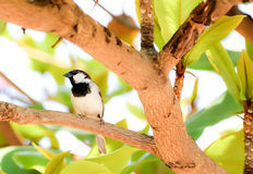 Sparrow. Is an animal who is always careful to make it easy to panic royalty free stock images