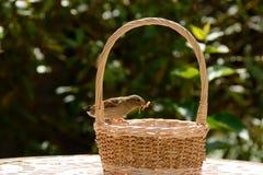Sparrow on basket Stock Photo