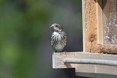 Sparrow on a Bird Feeder Stock Photos