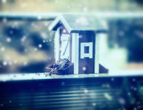 Sparrow and bird feeders at winter nature background with snow Royalty Free Stock Photography