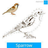 Sparrow bird learn to draw vector Royalty Free Stock Photo