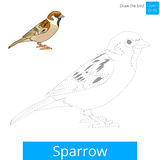 Sparrow bird learn to draw vector. Sparrow learn birds educational game learn to draw vector illustration Stock Photo