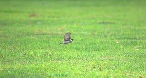 Sparrow Bird Stock Photos Download 20 171 Images
