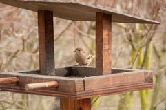 Sparrow on Bird Table Royalty Free Stock Photo