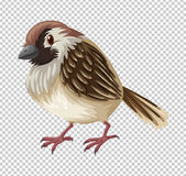 Sparrow bird on transparent background Royalty Free Stock Images
