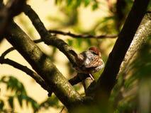 Sparrow bird on a twig Stock Photos