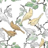 Sparrow bird on vine branch. Seamless pattern Stock Image