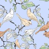 Sparrow bird on vine branch. Seamless pattern Royalty Free Stock Image
