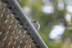 Sparrow bird. Is watching you Stock Photos