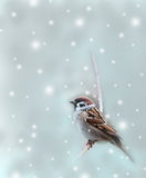 Sparrow bird in winter Royalty Free Stock Photo