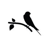 Sparrow black vector Stock Images