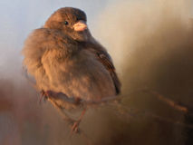 Sparrow. A sparrow on a branch Royalty Free Stock Image