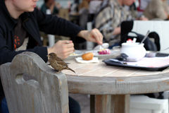 Sparrow in cafe Royalty Free Stock Photography