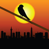 Sparrow with city in background vector illustration Royalty Free Stock Image
