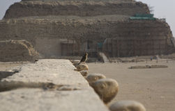 Sparrow close to Saqqara complex Royalty Free Stock Image