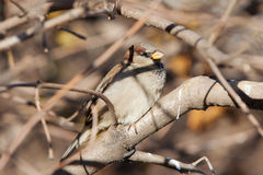 Sparrow close up Stock Photo