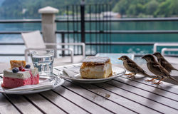 Sparrow eating cake Stock Images