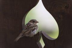 Sparrow on a fence Royalty Free Stock Photos