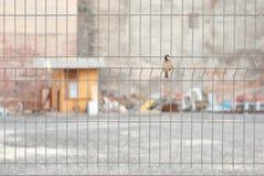Sparrow on the fence Stock Photo