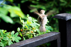 Sparrow flies away Royalty Free Stock Images
