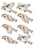 Sparrow Flying Animation Sprite Royalty Free Stock Photo