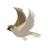 Sparrow flying bird vector illustration. Cartoon cute fauna feather flight animal silhouette. Spring freedom natural concept. Wildlife drawing  pet Royalty Free Stock Photo