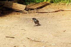 Sparrow. Stock Images