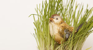 Sparrow in the grass. Toy Sparrow in the grass on a white background Royalty Free Stock Photography