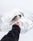 Sparrow on hand in winter Stock Photos